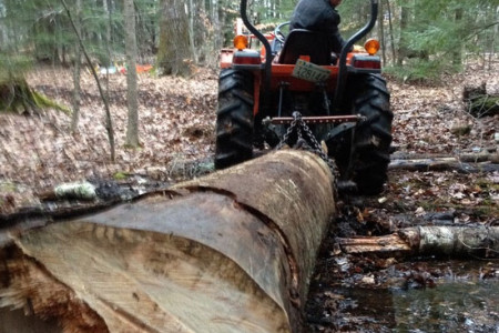 Hauling one of the birch logs out of the woods in Epping, NH.